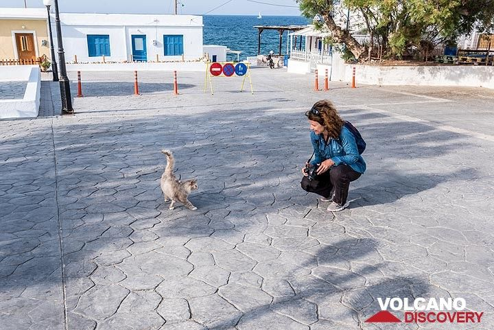 A friendly cat approaches Marina (Photo: Tom Pfeiffer)