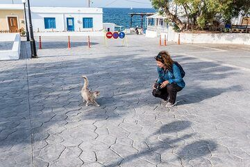 A friendly cat approaches Marina (Photo: Tom Pfeiffer)