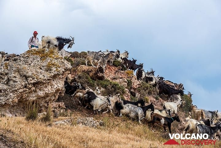 A goat herd passes nearby (Photo: Tom Pfeiffer)
