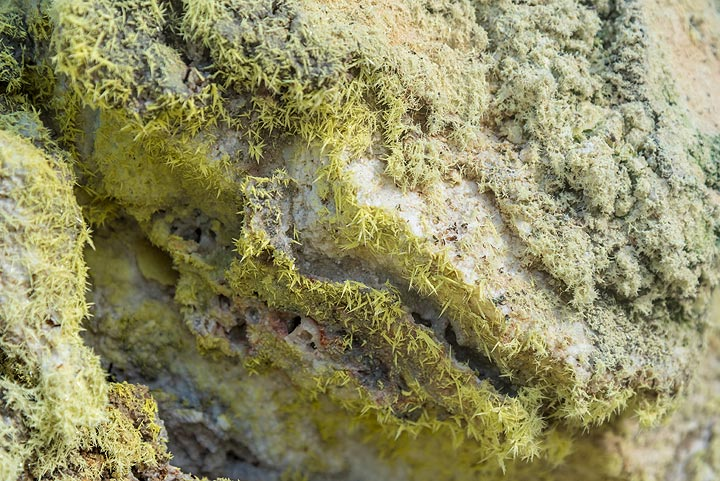 Beautiful monoclinic sulphur needles at a fumarole. (Photo: Tom Pfeiffer)