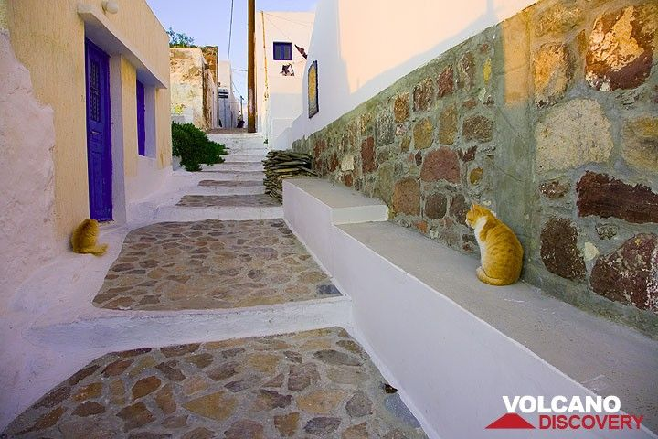 Two lazy cats in a street in Plaka (Photo: Tom Pfeiffer)