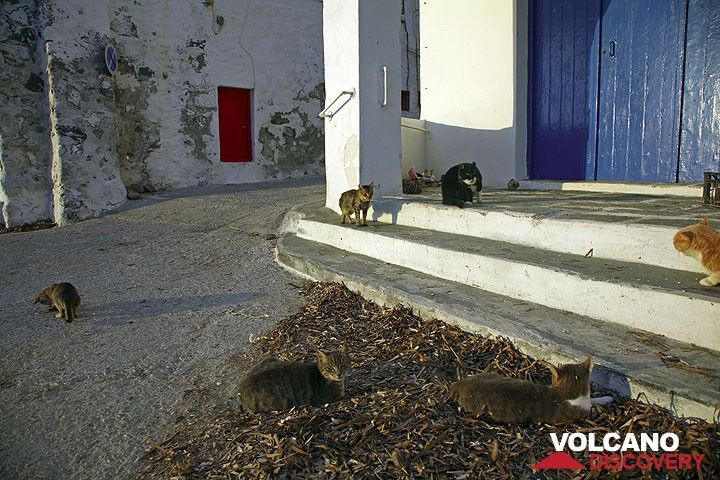 Group of cats gathering at the beach houses of Klima (Photo: Tom Pfeiffer)
