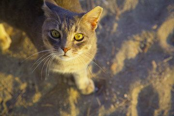 Beautiful cat from Klima (Milos Island) (Photo: Tom Pfeiffer)
