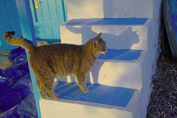 Wie überall auf den griechischen Inseln gehören Katzen aller Farben zu den selbstbewussten Bewohnern. Besonders im winzigen Fischerort Klima scheint es vielen besonders zu gut zu gefallen... (Photo: Tom Pfeiffer)