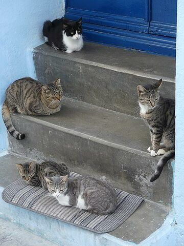 Nisyrian street cats watching life go by (Photo: Ingrid Smet)