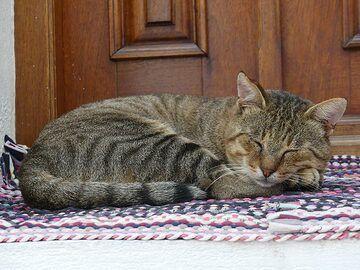 Mourgos, the street´s tomcat, having a nap on his favourite spot (Photo: Ingrid Smet)