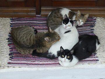 All Nisyrian locals take siesta time seriously (Photo: Ingrid Smet)