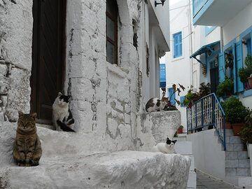 Street cats in a narrow street of the historic old part of Mandraki (Photo: Ingrid Smet)