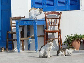 Street cats at a Mandraki fish tavern (Photo: Ingrid Smet)