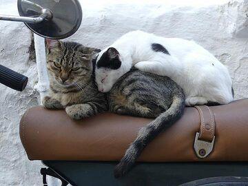 Snoozing together on an old Vespa (Photo: Ingrid Smet)