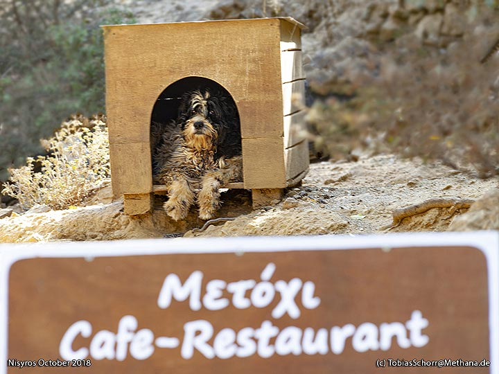 The dog protects the path to Diktaios mountain. (Photo: Tobias Schorr)