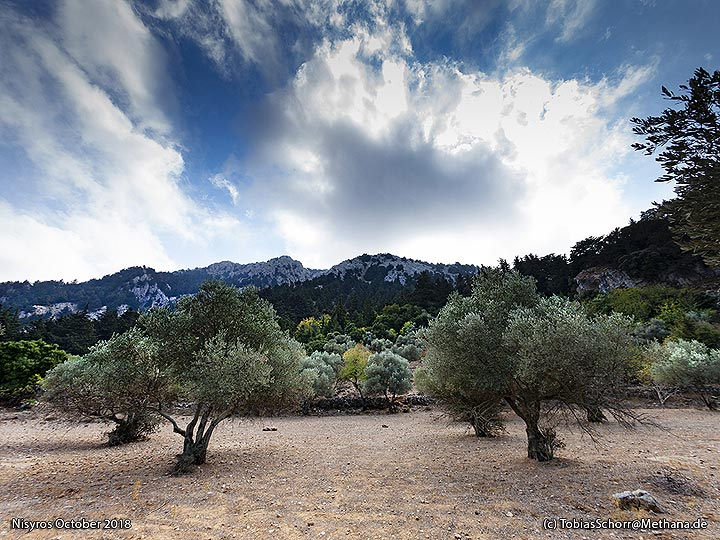 Olive fields in the Diktaios mountains on Cos. (Photo: Tobias Schorr)