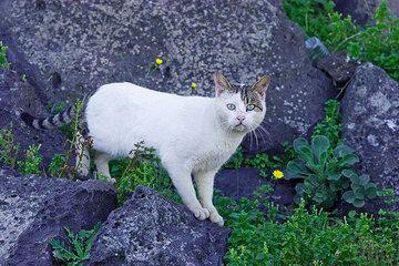 Weiße Katze mit getiegertem Schwanz... (c)