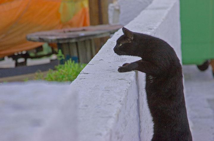 Schwarze Katze auf Nisyros (c)