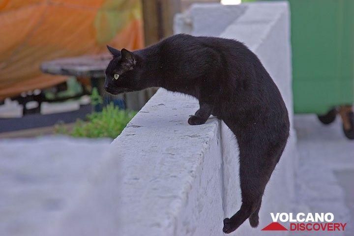 Black cat in Mandraki (Photo: Tom Pfeiffer)