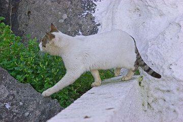 Weiße Katze und Grün (Photo: Tom Pfeiffer)