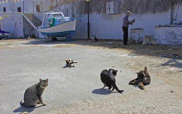 Katzen in der Nähe des Grills. (c)