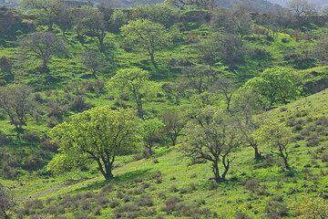 Bäume beginnen zu grünen. (c)