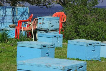Blue beehives and red chairs. (c)
