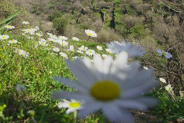 Nisyros März 2008: Frühling (c)