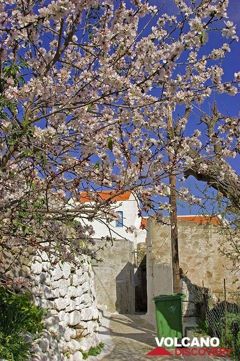 Spring in Nikia (c)