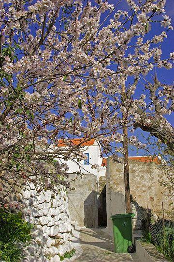 Frühling in Nikia (c)
