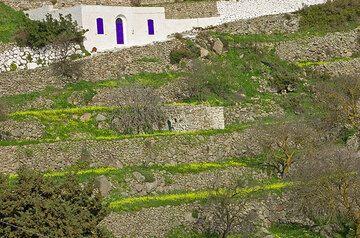 Terrassen unterhalb der Straße nach Nikia (c)