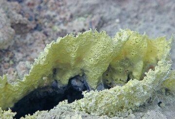 Paper-thin crusts of sulphur. (c)
