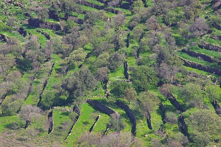 Terraces near Emborio (c)