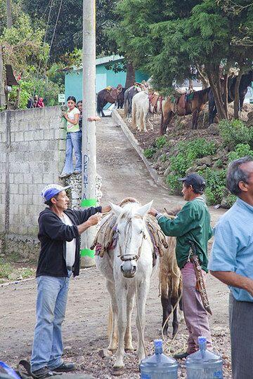 Notre porteur pour le camp au volcan Pacaya (Photo: Tom Pfeiffer)