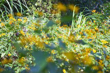 Yellow flowers (Photo: Tom Pfeiffer)