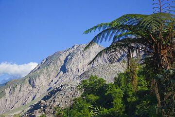 Tree fern near Santiaguito  (Photo: Tom Pfeiffer)