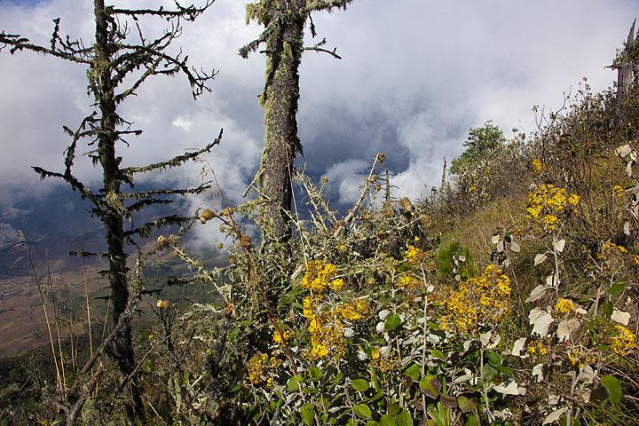Forest and fog on Acatenango (Photo: Tom Pfeiffer)
