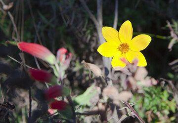 Yellow flower (Photo: Tom Pfeiffer)