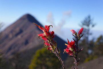 Flor roja Con Fuego en el Fondo (Photo: Tom Pfeiffer)