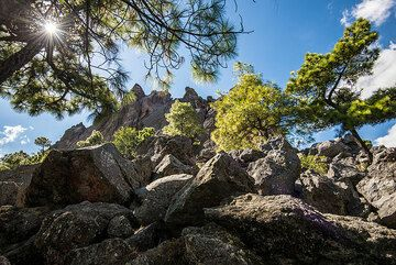 Pine trees have grown between the large blocks of the 1818 dacite lava. (Photo: Tom Pfeiffer)