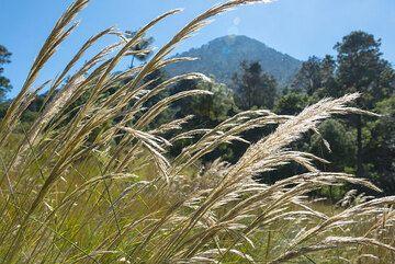 Sunny break in the meadows at the foot of Santa Maria (Photo: Tom Pfeiffer)