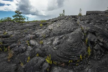 Lava flows near Kalapana, about 13 years old, have started to slowly become green again. Ferns are among the first plants to take hold. (Photo: Tom Pfeiffer)