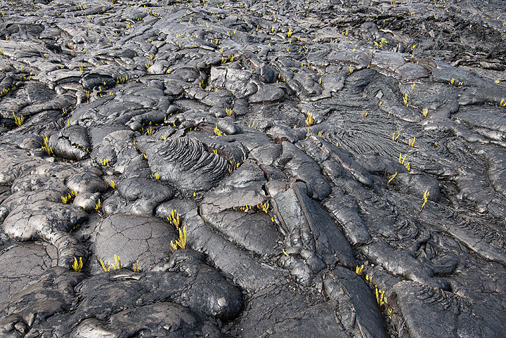 Much of the ground on pahoehoe lava flows is formed of overlapping lava flow toes. (Photo: Tom Pfeiffer)