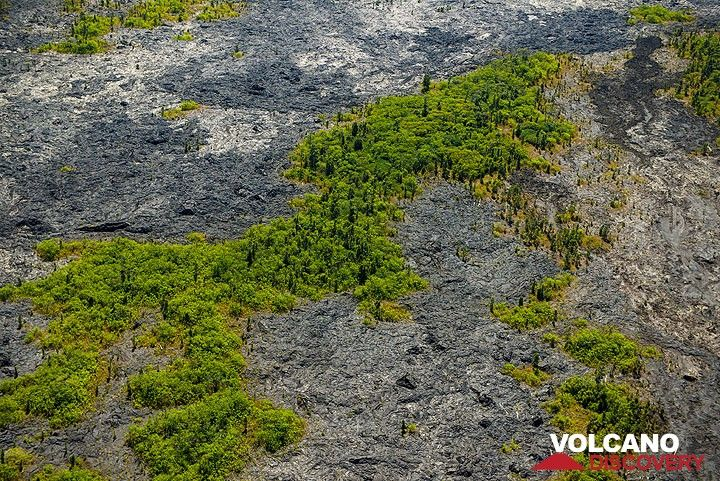 Younger and older lava flows in the area of Royal Gardens (Photo: Tom Pfeiffer)