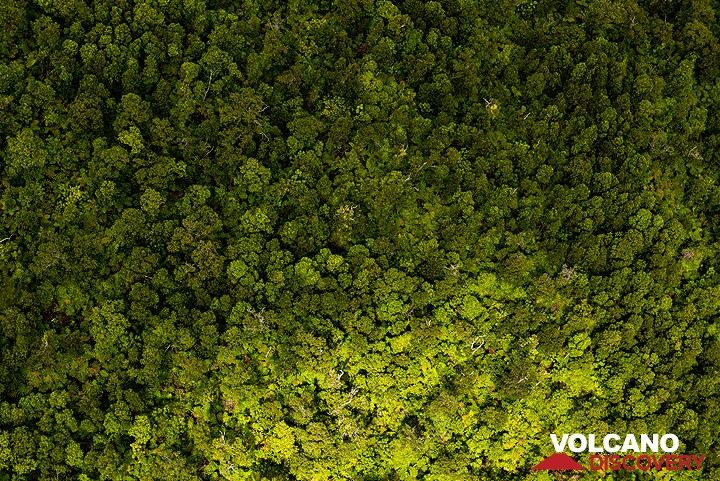 Still intact green forest from above. (Photo: Tom Pfeiffer)