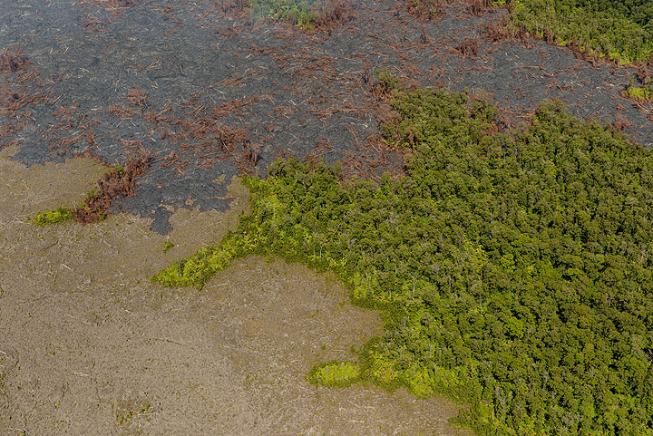 Intact forest, 20 years-old lava flows (left) and recent flows invading the area. (Photo: Tom Pfeiffer)