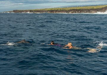 ...to try swimming with dophins! (Photo: Tom Pfeiffer)
