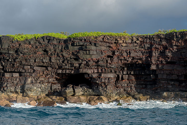 Sea cliff of the Puna district showing young lava flows and some old lava tubes. (Photo: Tom Pfeiffer)