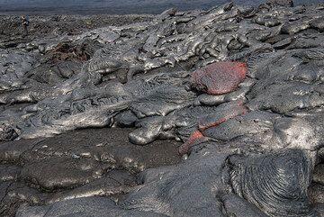 Small pahoehoe breakouts - heat radiation is intense in a few meters distance! (Photo: Tom Pfeiffer)