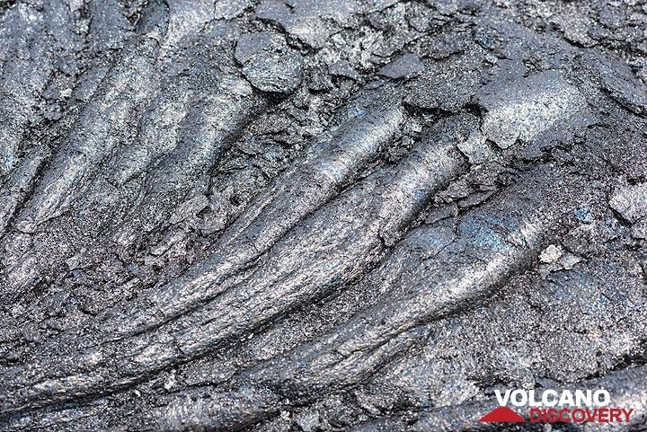 Older, but still very young (few weeks old) lava ropes. (Photo: Tom Pfeiffer)