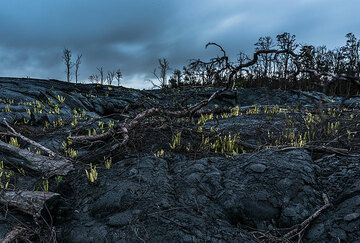 Remains of devastated rain forest in the rainy evening twilight. (Photo: Tom Pfeiffer)