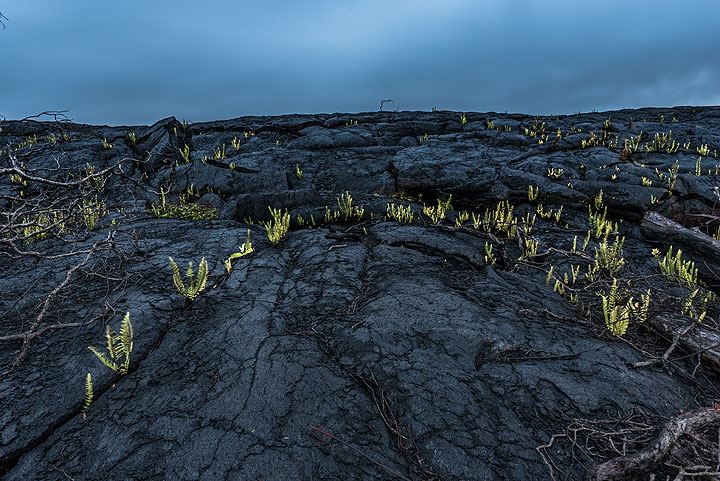 Small green ferns start to recover the terrain. (Photo: Tom Pfeiffer)