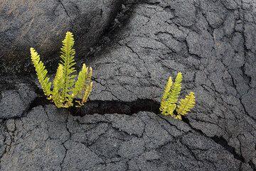 Group of ferns (Photo: Tom Pfeiffer)