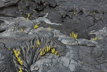 Different surface textures and colors - where the glassy crust of the lava flow is still intact, the flow is silvery. (Photo: Tom Pfeiffer)